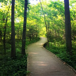 Ritchey Woods Swamp Trail in Summer